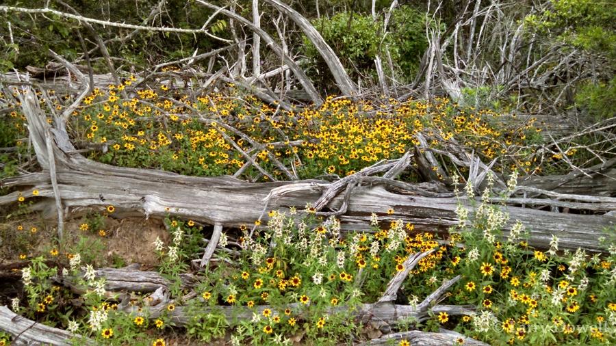 TexasSummerWildflowers-Tumbler